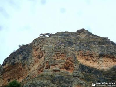 Hoces Río Duratón-Sepúlveda; pueblos de la sierra de madrid sierra norte de sevilla fotos madrid